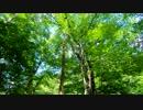 第14位:東北ずん子とgungunGUNMA釣り修行#8「梅雨前の新緑渓流」