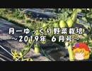 月一ゆっくり野菜栽培 2019年6月