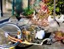 平成29年2月12日 集団ストーカーに家の前で奇声、叫び声を上げられ自転車を蹴り倒されました