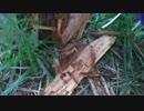足立区の荒川で昆虫と植物を採集する