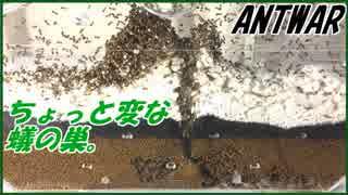 砂鉄入りの土をアリに掘らせたらちょっと変な蟻の巣が生成された。