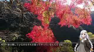 あかりと行くニンジャ250の旅 Part.4