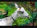 撮ってきた動物写真を公開してみる その1 (通算5本目)