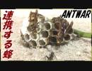 ハチの巣ごとアリに与えたら戦争が勃発した。
