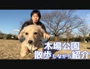 【公園散歩】木場公園を犬と散歩しながら紹介します(YouTubeで『ワンチュー犬』を検索!)