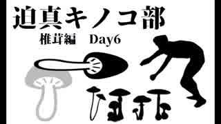 迫真キノコ部・しいたけ栽培の裏技 Day6