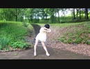 【月野奈月】てるてる 踊ってみた