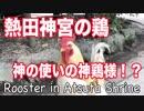 熱田神宮にいる鶏!神の使いの神鶏様!?