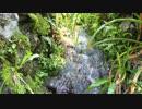澤乃井園周辺遊歩道の小さい滝