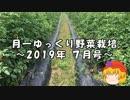 月一ゆっくり野菜栽培 2019年7月