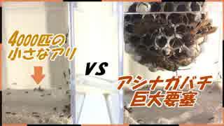 キアシナガバチの巨大要塞vs4000匹のケアリ