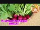 おてがる野菜づくり、収穫します!