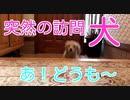 【名シーン】突然の訪問犬(カニンヘンダックスフンド)short movie(YouTubeで『ワンチュー犬』を検索!)