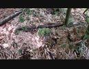 (雑談回)変態忍者の、狩猟&有害鳥獣駆除従事活動記・その80