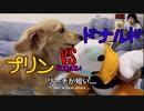 【じゃれあい】プリン VS ドナルド(実況:てぃかし 解説:スポンジボブ)(YouTubeで『ワンチュー犬』を検索!)