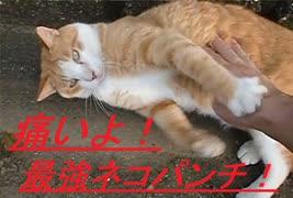 【調子にのった結末❢】「猫パンチ・ツメ付き」をくらった