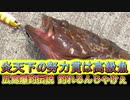 【フィッシング】炎天下の努力賞は高級魚=03【広島爆釣伝説】