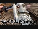 真剣白刃取りする猫 してるんです~