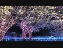 夜桜ナイトZOO 最終日 ぶらり園内散歩 2019/4/7
