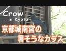 京都の神社,城南宮の暑そうなカラス Crow in Jonangu Shrine, Kyoto