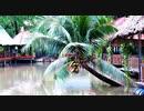 【ベトナム旅行記・Vietnam Travel】ホーチミンの釣り堀を観察にバスで行く!@ミニストップ(コンビニ)でのフルーツ等の食レポあり♪【VLOG・RX100M6&Pixel 3 XL】