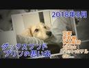 【思い出】ダックスフンド プリンのアルバム集(2018年5月)(YouTubeで『ワンチュー犬』を検索)