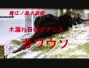 新江ノ島水族館 木漏れ日のオアシス コツメカワウソ