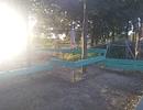 ファミリー公園前の公園に行ったよ。平均台がたくさん。夕日も美しい! 動物の足跡?