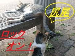Σ(゚Д゚) 他ネコのしっぽにじゃれつく猫