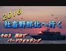 2016 北海道旅行3 羅臼でバードウォッチング