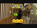 先住猫vs野良猫の争い