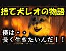 感動アニメ! 【捨て犬レオの物語】 涙腺崩壊!心優しき本当の人間にだけ観て欲しいです!