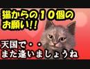 感動アニメ! 【猫からの10個のお願い】 猫好きさん必見!心優しき本当の人間にだけ観て欲しいです!