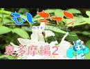 【ソロキャン】むしキャン 奥多摩編2【ゆっくり】