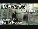怒る!京都市動物園のゴリラ
