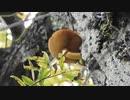 木に生えるキノコと遅くに出るタイプのキノコの名前がわからんからおしえて2