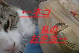 【食テロ1】お弁当を食べさせてくれない猫