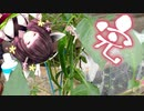 【VOICEROID栽培】へにょきり菜園 秋休み編 (3/4)