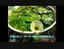【近況報告】ビオトープ&アクアテラリウム【8~10月】