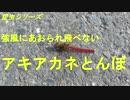 昆虫シリーズ 強風にあおられ飛べない アキアカネとんぼ