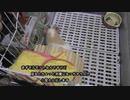 モル小屋清掃動画