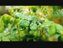 Close Up Video Of Green Leaves 荒谷竜太
