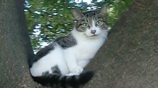 【トリック⁉】どこから見ても目が合う猫