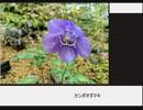 憎き害虫をコロコロするフラワーナイトガール 咲くやこの花館レポート14