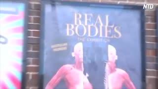 【閲覧注意】 干からびた肉親 「この中に俺の家族が・・・!」 臓器を抜かれ人体標本にされた弟 【中共の暴虐】