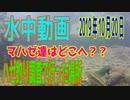 水中動画(2019年10月20日)in江東区&江戸川区のハゼ調査時