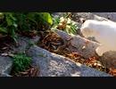 マムシに神の手、音速の猫パンチ!