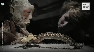 【閲覧注意】 「人体の不思議展」は 拷問死体展だった 【中共の暴虐】