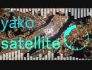 EDM作ってみた【satellite】