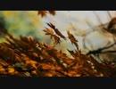 Autumn leaves - サンペイタツロウ feat. 初音ミク